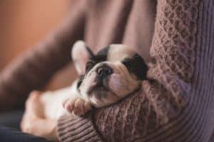 ALT protege a los cachorros del frio