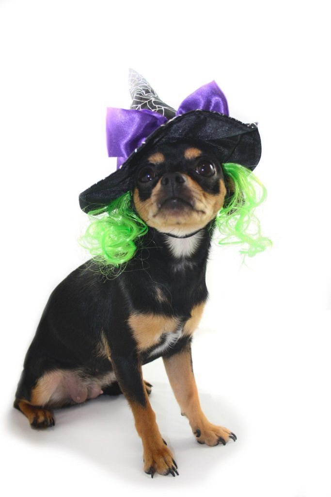 ALT disfraces para perros chihuahua sombrero de bruja