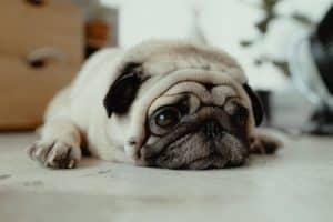 ALT abriga a tu perro por las noches