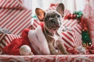 regalo navidad perros pequeños ropa para perros