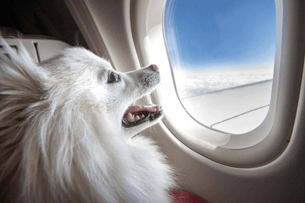 ALT viajar con perro en avion
