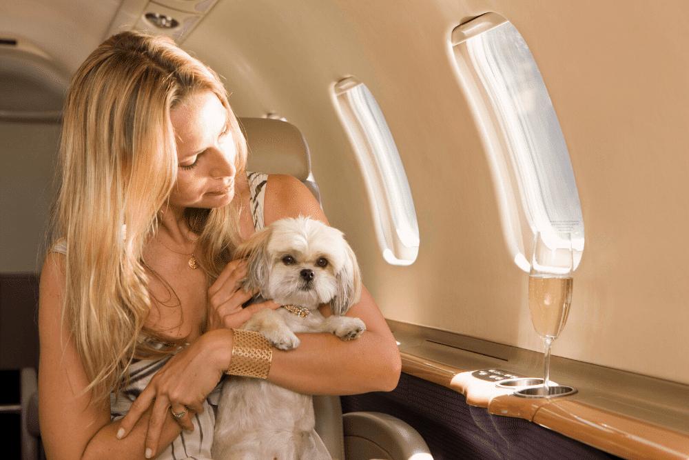 ALT viajar con perro en avion privado