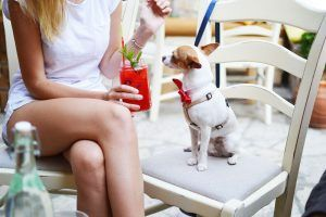 alt perros mini toy perros raza pequeña