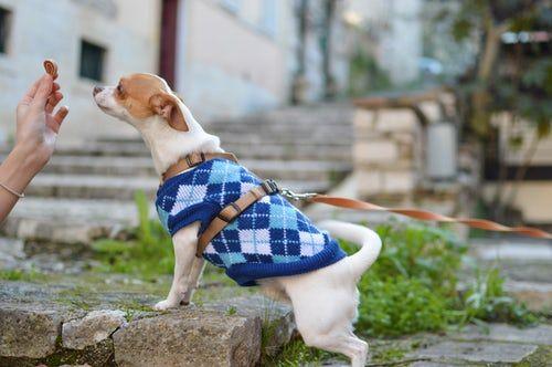 ALT que comen perros chihuahua perro mini toy